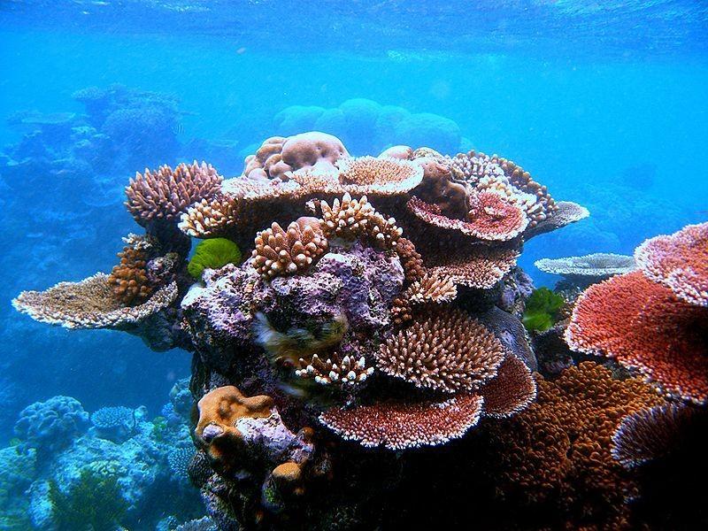 澳洲巴厘岛十二天商务考察团-中国国旅官网